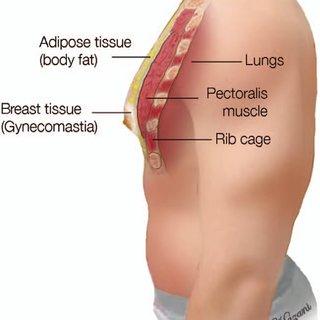 Erkeklerde Meme Anatomisi